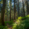 28  G Sunny Trail Through Forest V