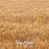 12  G Wheat Close