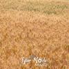 52  G Evening Wheat Close