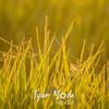 53  G Sunrise Spider Web Grass
