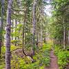 25  G Trail Through Trees V