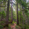 23  G Forest Trail V