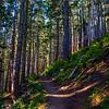 9  G Trail Up V