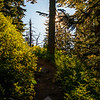 10  G Sunny Trail Up V