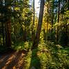 7  G Sunny Trail V