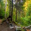 14  G Trail aBack