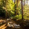 17  G Trail Sun