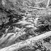 8  G Cold Spring Creek BW