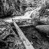 33  G Cold Springs Creek BW
