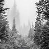 28  G Foggy Trail Up V