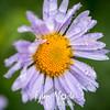 58  G Flower Dew