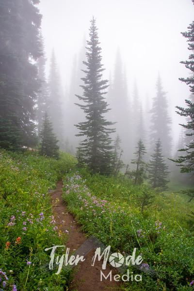 44  G Foggy Trail Up V