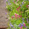 53  G Trail Flowers