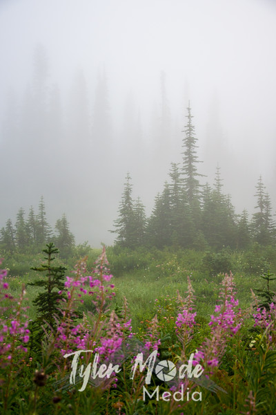 17  G Fog and Flowers V