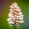 59  G Flower Dew