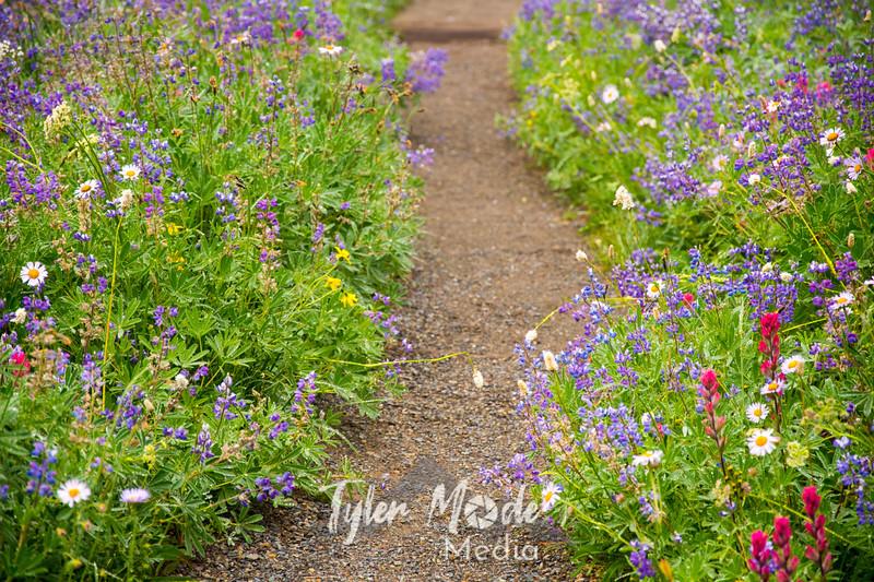52  G Trail Flowers