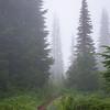 26  G Foggy Trail V