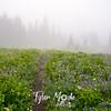 67  G Foggy Trail