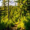 35  G Trail and Rainier V