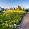 31  G Trail and Flowers Tatoosh