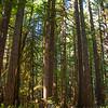 3  G Tall Trees V
