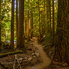 6  G Trail Through Forest