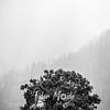 34  G Gorge Rays Tree BW