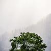 33  G Gorge Rays Tree