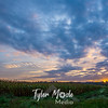 12  G Corn Field Sunrise Wide