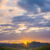 13  G Corn Field Sunrise Wide V