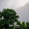 36  G Gorge Rays Trees
