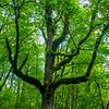 25  G Tree V