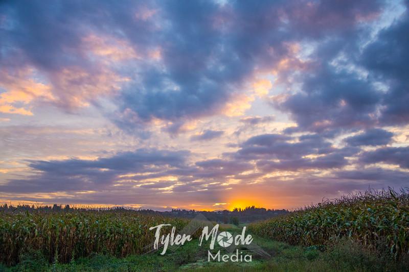 1  G Corn Field Sunrise