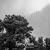 37  G Gorge Rays Trees BW