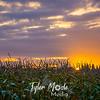 9  G Corn Field Sunrise
