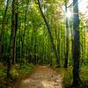 18  G Forest Trail V