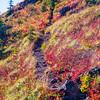 43  G Fall Color Trail V