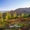 12  G Fall Colors