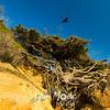 9  G Tree of LIfe Crow