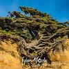 3  G Tree of LIfe