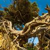 8  G Tree of LIfe V