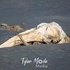 2  G Whale Skeleton