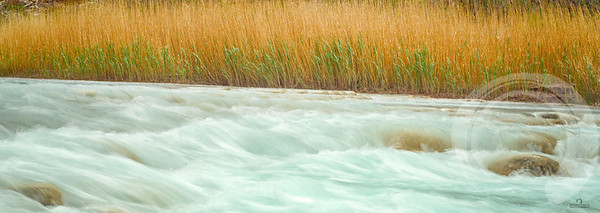 River and Rushes