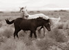 Wild horses in California. ©2010 David Bundy