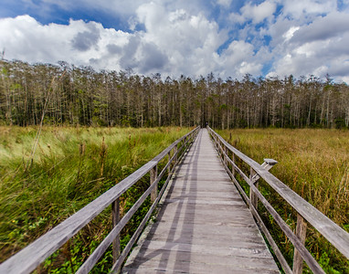 A Walk In The Corkscrew Swamp
