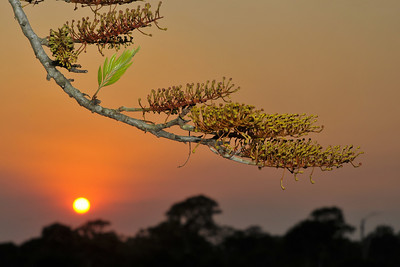 This one is a ringer, not being a beach, but a shot of the flowers of a Grevillea robusta, highlighted against the setting sun, in a sky darkened by smoke from burning sugar cane.