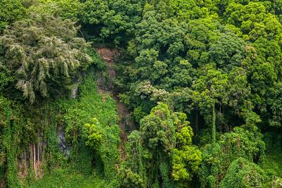 Green Wall on Pipiwai Trail, Haleakala NP