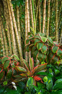 Hawaii Tropical Botanical Garden II