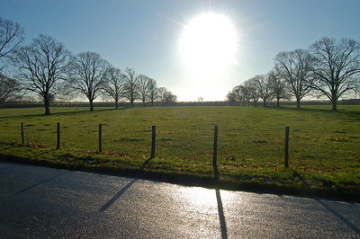 Low sun near Riseholme Hall