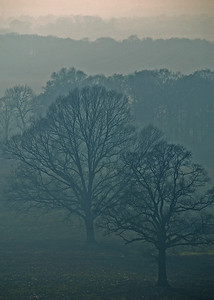 More misty trees. I love the effect of the layers in the mist fading in the distance